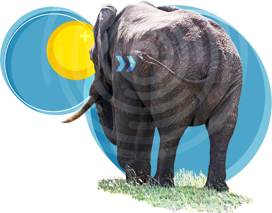 How Elephants Uses Their Tails to Chase Away Mosquitoes article