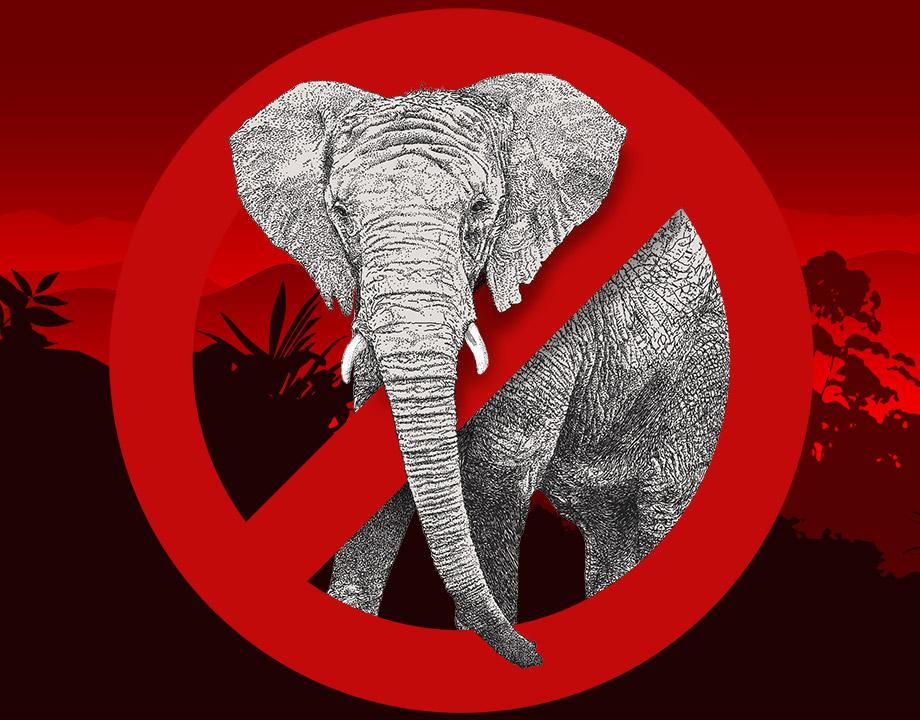 No Elephants article